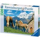 Cavalli Haflinger
