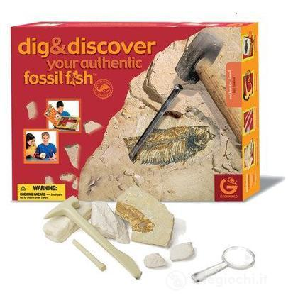 Dig & Discover - Authentic Fossil Fish