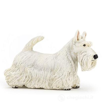 Scottisch Terrier (54028)