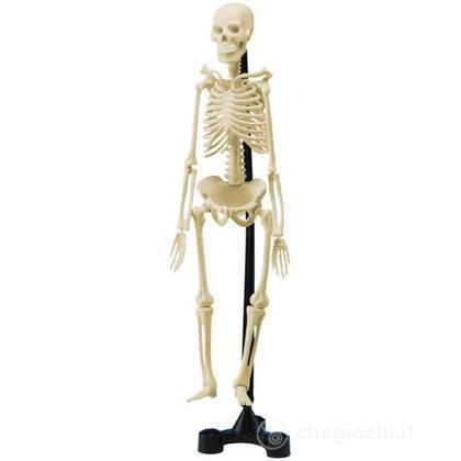 Mini-scheletro