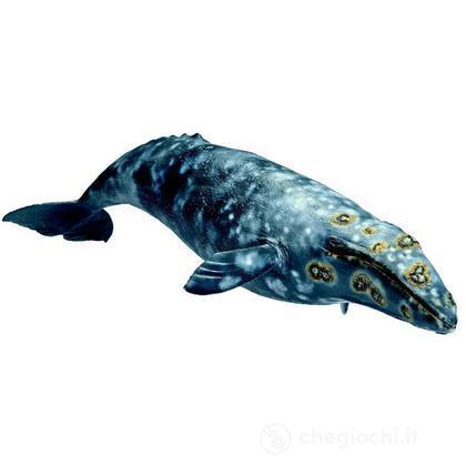Balena grigia (16082)