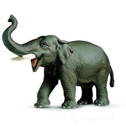 Elefante indiano (14144)