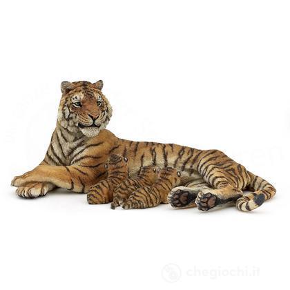 Tigre coricata allatta (50156)