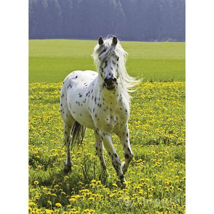 Cavallo selvaggio