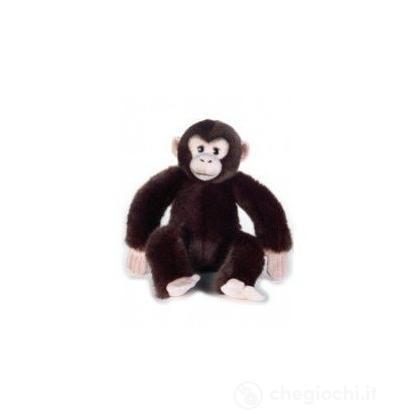 Scimpanzé Baby