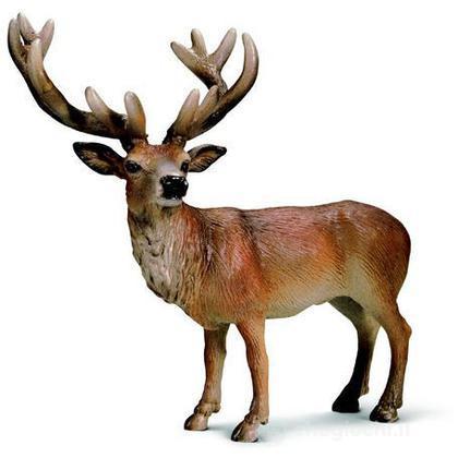 Cervo rosso (14248)