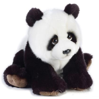 Orso Panda Medio