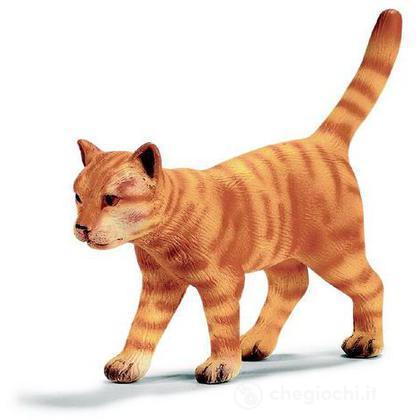Gatto che cammina (13286)
