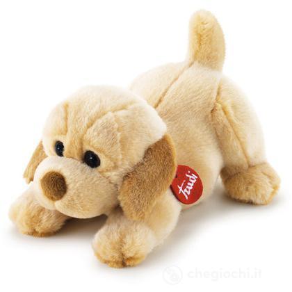 Labrador Joe sdraiato