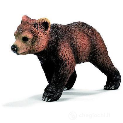 Grizzly cucciolo (14324)