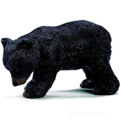 Orso nero americano cucciolo (14326)