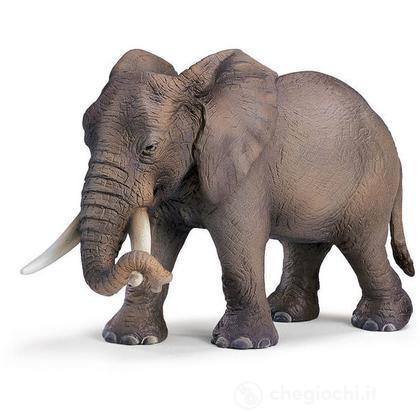 Elefante femmina africana (14342)