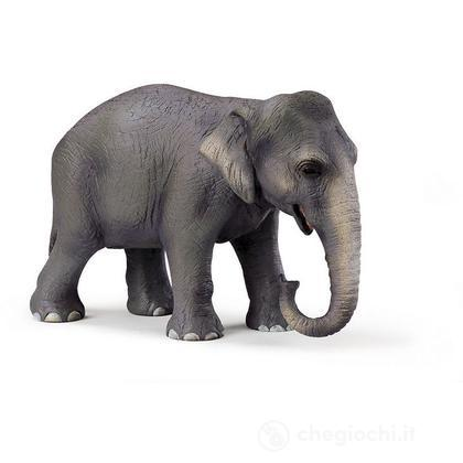 Elefante femmina asiatica (14344)