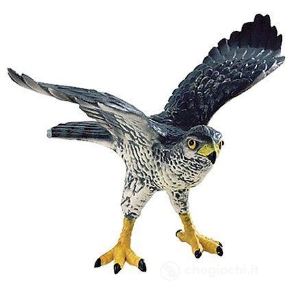 Aquila (69360)