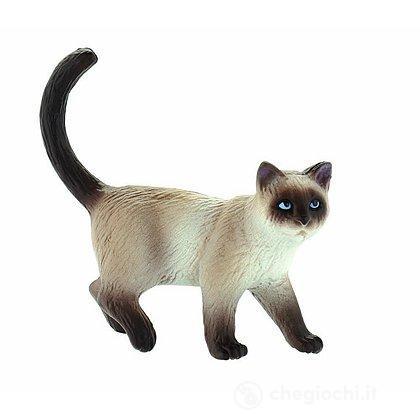 Gatto - Domestic Cat Kimmy (66370)