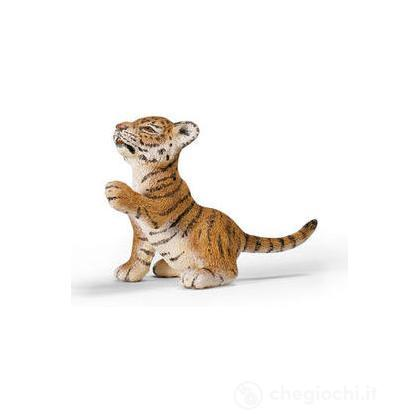 Tigre cucciolo che gioca (14372)