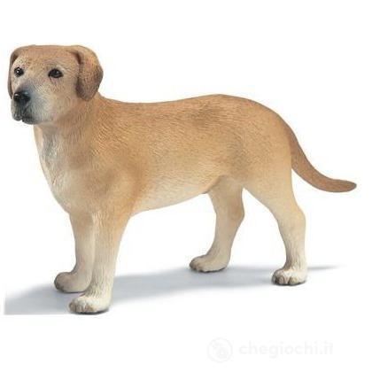 Labrador maschio (16386)