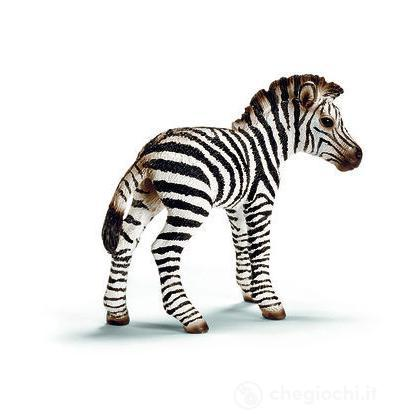 Zebra puledro (14393)