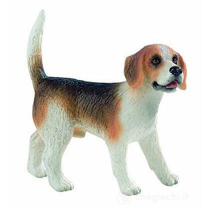 Cane - Beagle Henry (65424)