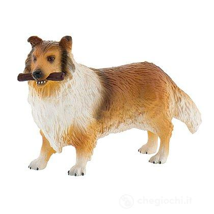 Cane - Rough Collie Lassie (65444)
