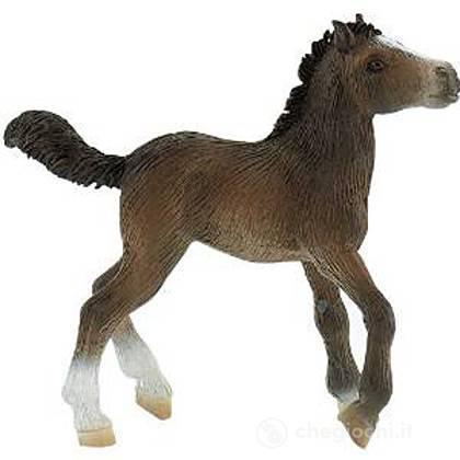 Cavalli - Lipizzaner Foal (62512)