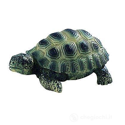 Tartaruga cucciolo (63554)