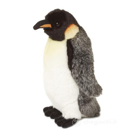 Pinguino imperatore piccolo