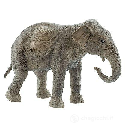 Elefante Indiano (63588)