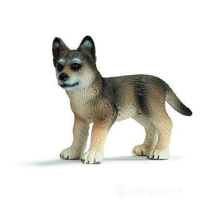 Lupo cucciolo (14606)
