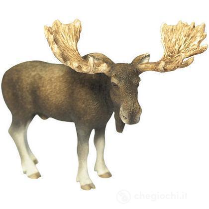 Alce maschio (14619)