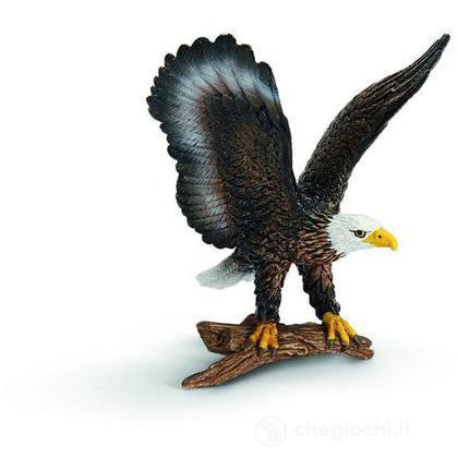 Aquila di mare testabianca (14634)