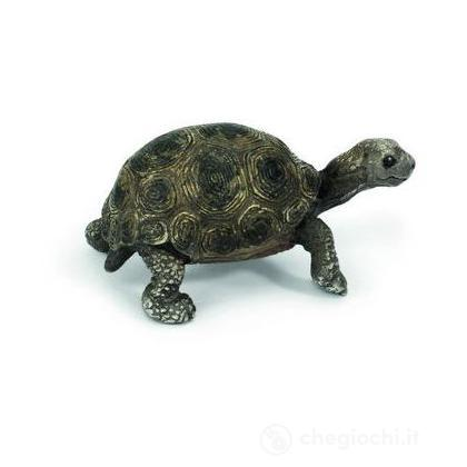 Cucciolo di tartaruga gigante (14643)