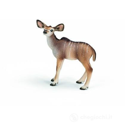 Cucciolo di antilope kudu (14644)