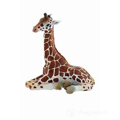 Giraffa Cucciolo (63669)