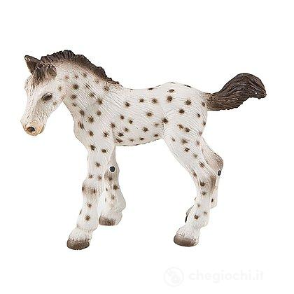 Cavalli - Knabstrupper Foal (62673)