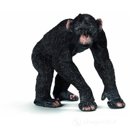 Scimpanzé Maschio (14678)