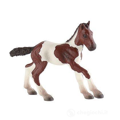 Cavalli - Paint Horse Foal (62678)
