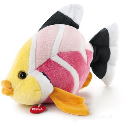 Pesce Stella rosa