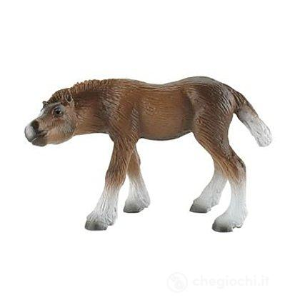 Cavalli - Black Forest Foal (62689)
