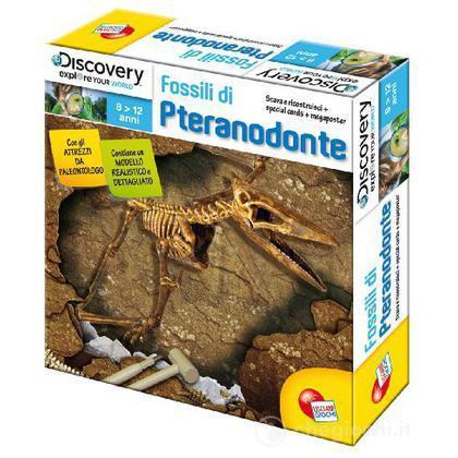 Fossili di Pteranodonte (3692)