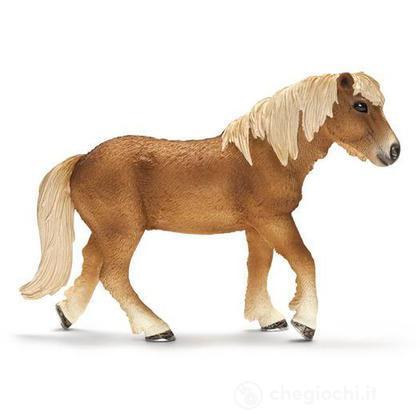 Giumenta island pony (13708)