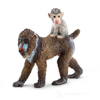Mandrillo femmina con cucciolo (14716)