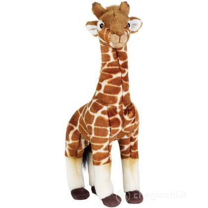 Giraffa Media (770718)