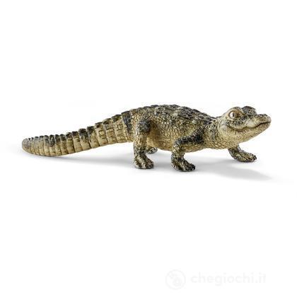 Cucciolo Di Alligatore (14728)