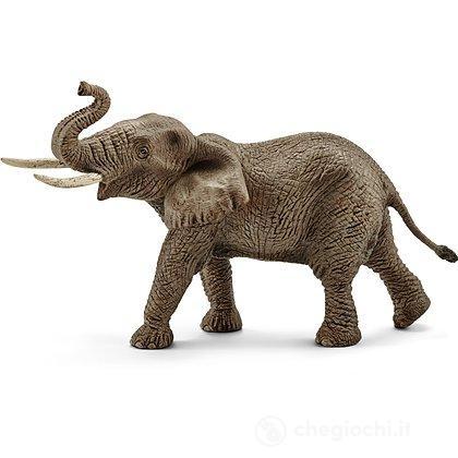 Elefante Africano Maschio (14762)