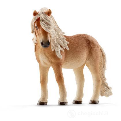 Cavalla Pony Stute (13790)