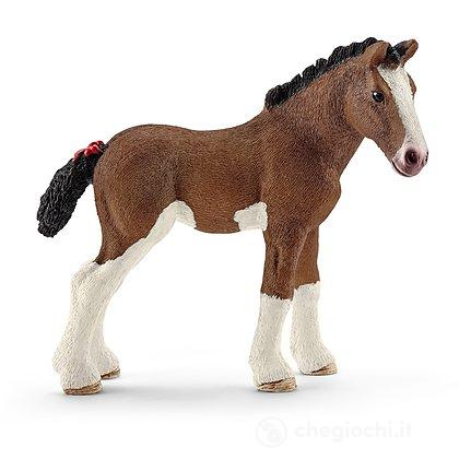 Puledro Clydesdale (13810)