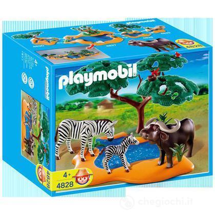 Bufalo con zebre  (4828)