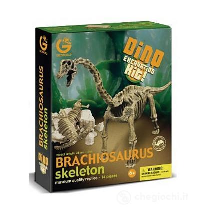 Brachiosauro Scheletro