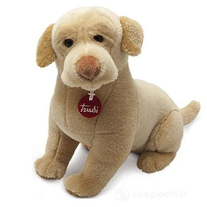 Labrador Joe 22876